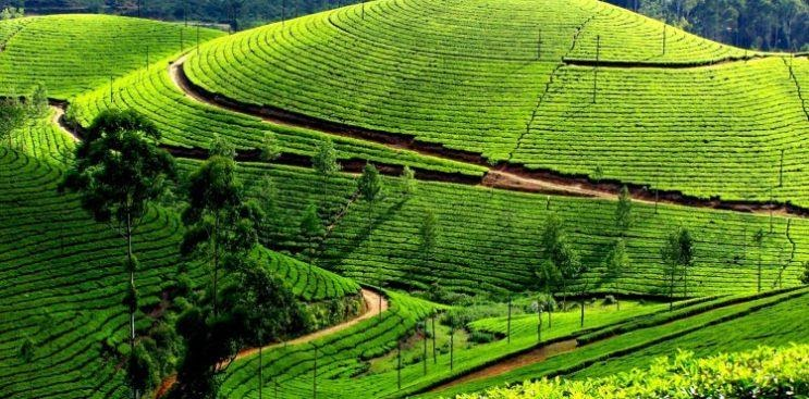 Munnar – A Quintessential Spot to Holidaying With Family and Friend