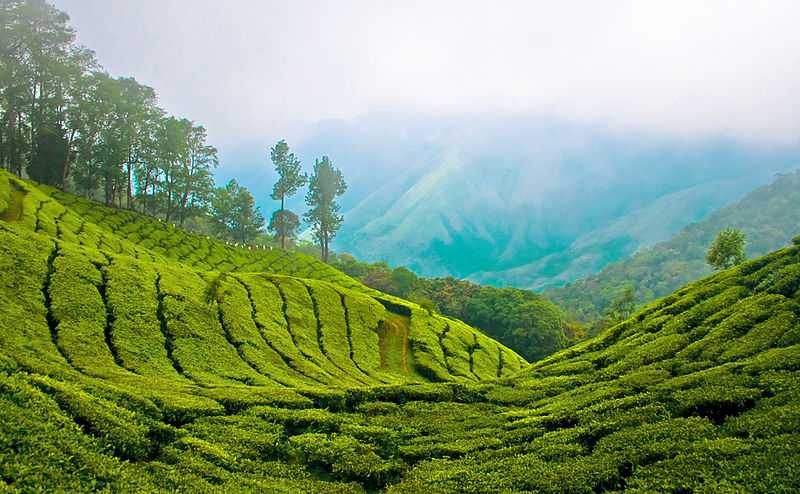 Munnar- Place For Romantic Couples