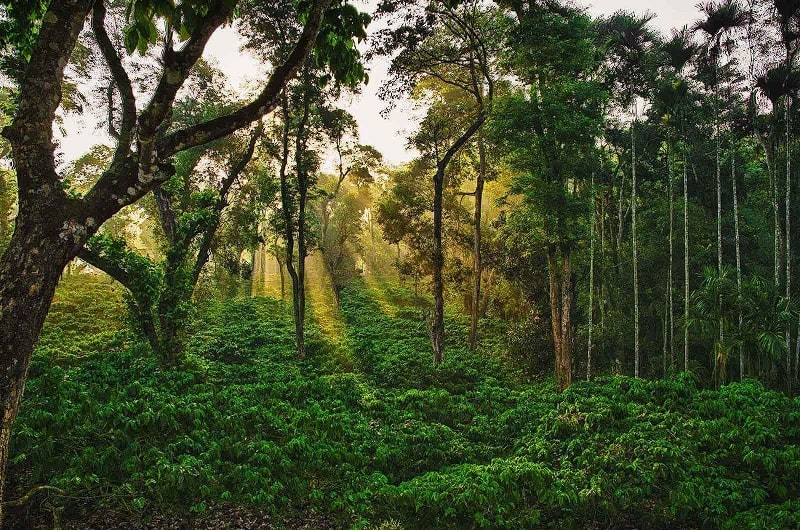 Coorg Means Coffee, Coffee and Coffee