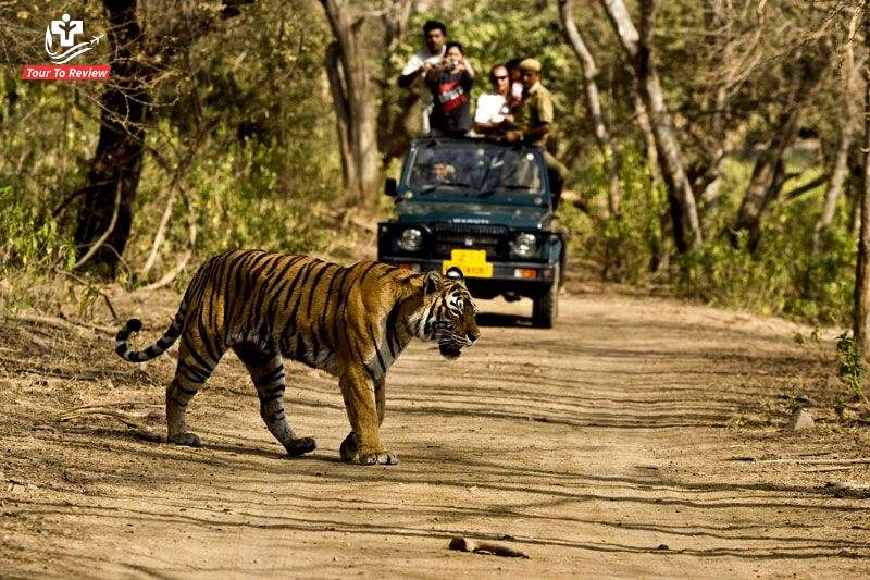Things to do in Anamalai Tiger Reserve